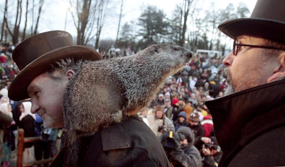 Punxsutawney Phil, the weather predicting groundhog, center, stands on the shoulder of one of his handlers John Griffiths while looking at other handler Ben Hughes in 2011.
