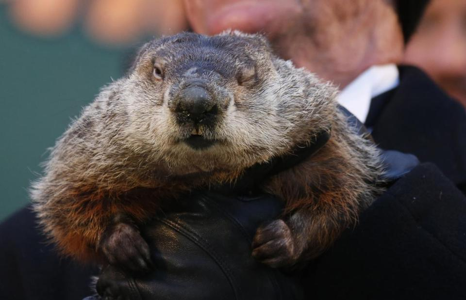 Punxsutawney Phil emerged from his lair Saturday but didn't see his shadow.