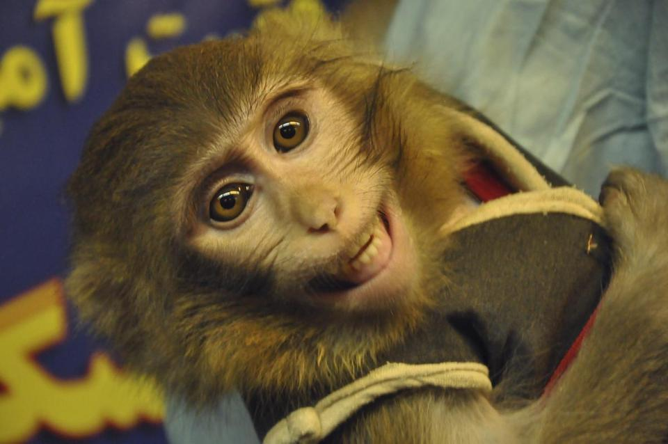 An Iranian technician held a monkey last Wednesday after it reportedly rode a rocket into space.
