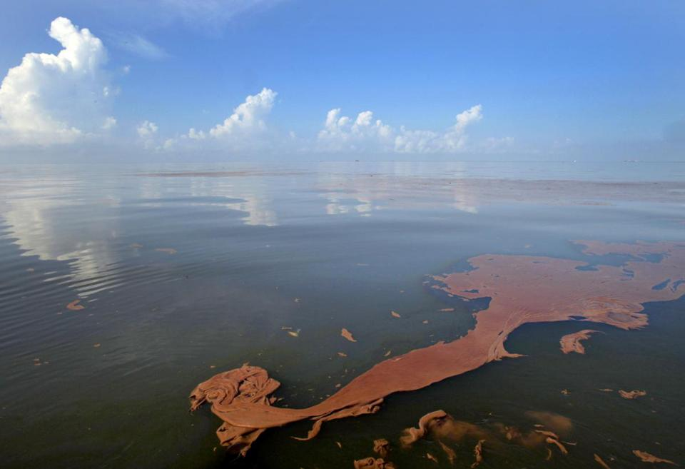 Oil from the Deepwater Horizon spill floated in Barataria Bay, off the coast of Louisiana, in 2010.