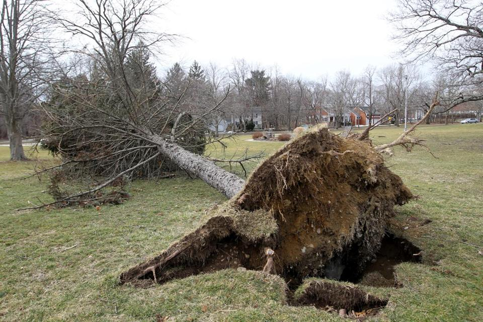 A tree on the town common in Scituate awaits removal.