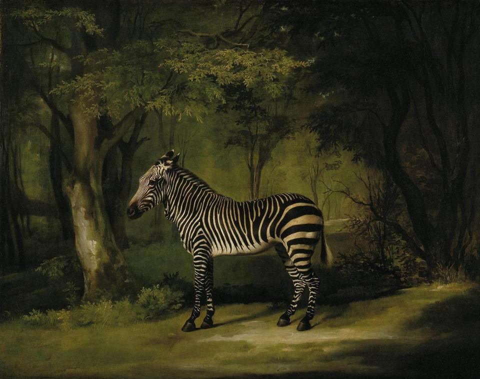 """Zebra"" by George Stubbs"