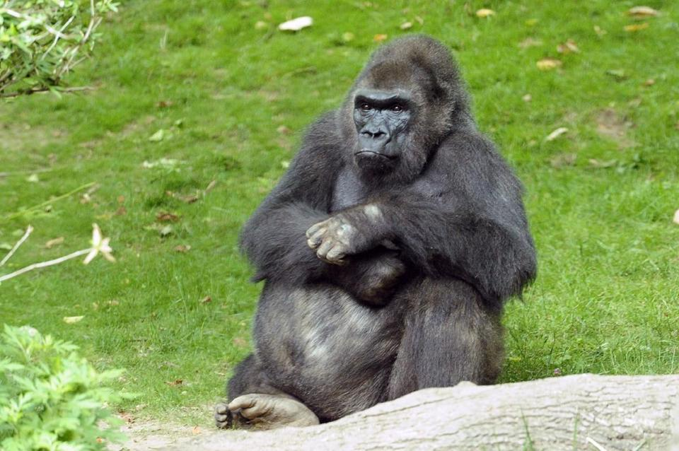 Pattycake was a crowd favorite at the Bronx Zoo, where she had lived since 1983. She has 10 children.