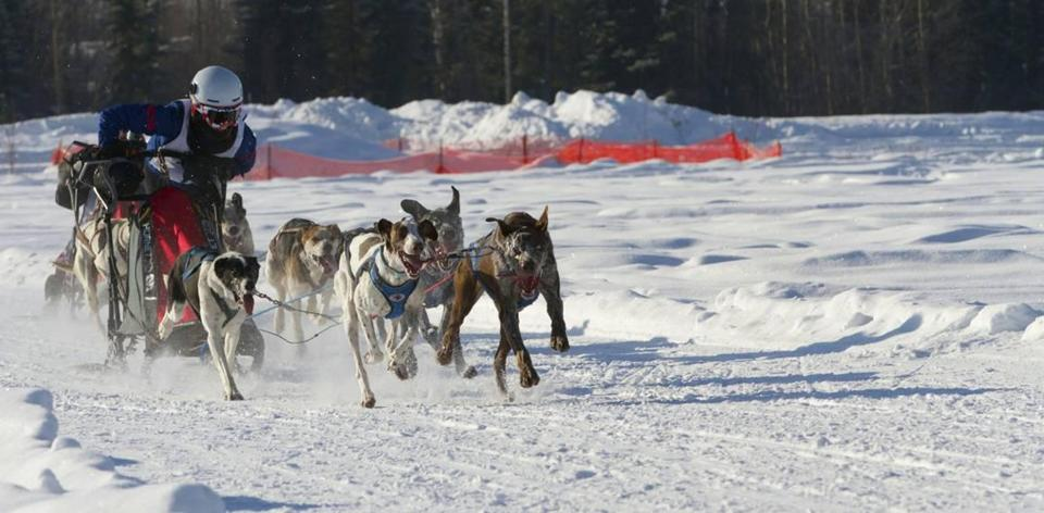 Lily Stewart's dog team, and her high-tech Danler Hornet sled, can hit speeds nearing 30 miles an hour.