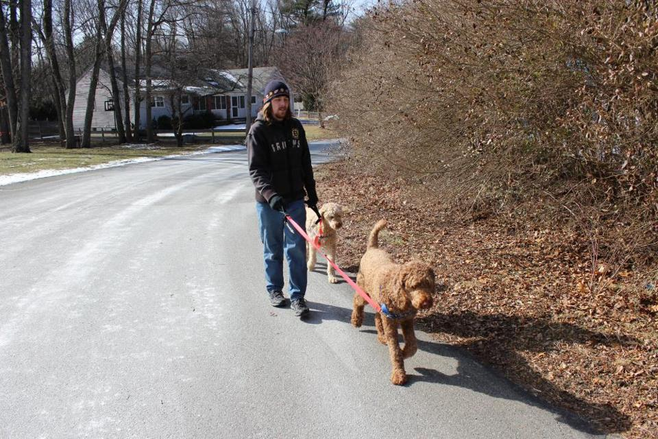 Daniel Lombard takes poodles Bella and Joey for a walk in their Westwood neighborhood.