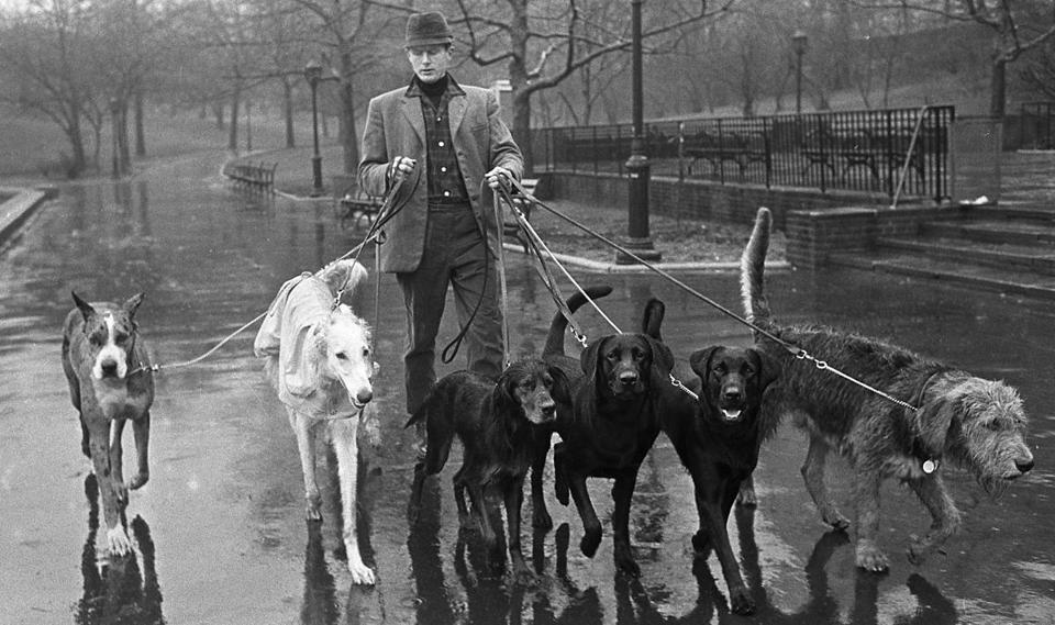 3/5/1964-Jim Buck, professional dog walker, walking in and around Central Park. Sack 69480. Staff photo. NYTCREDIT: Neal Boenzi/The New York Times