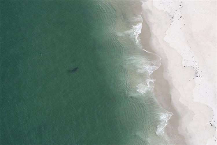 A 15-foot great white shark was spotted stalking seals Sunday about four or five miles south of the Chatham inlet.