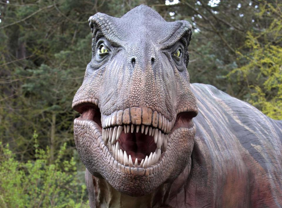 A Tyrannosaurus rex replica at the Woodland Park Zoo in Seattle. The dinosaur was a hunter.