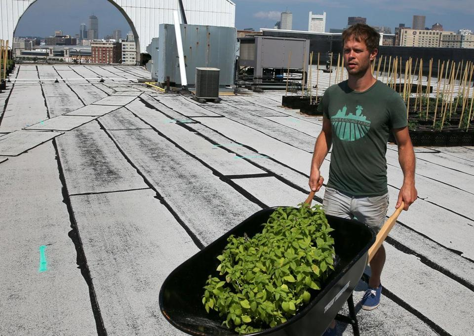 John Stoddard transported produce at Higher Ground Farm, on the roof of the Boston Design Center. The farm aims to supply neighborhood restaurants and markets such as Tavern Road.