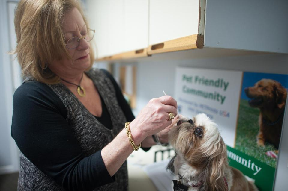 Justine, a 6-year-old shih tzu, lives at Devon Wood in Braintree, where dogs' DNA is stored in a database.
