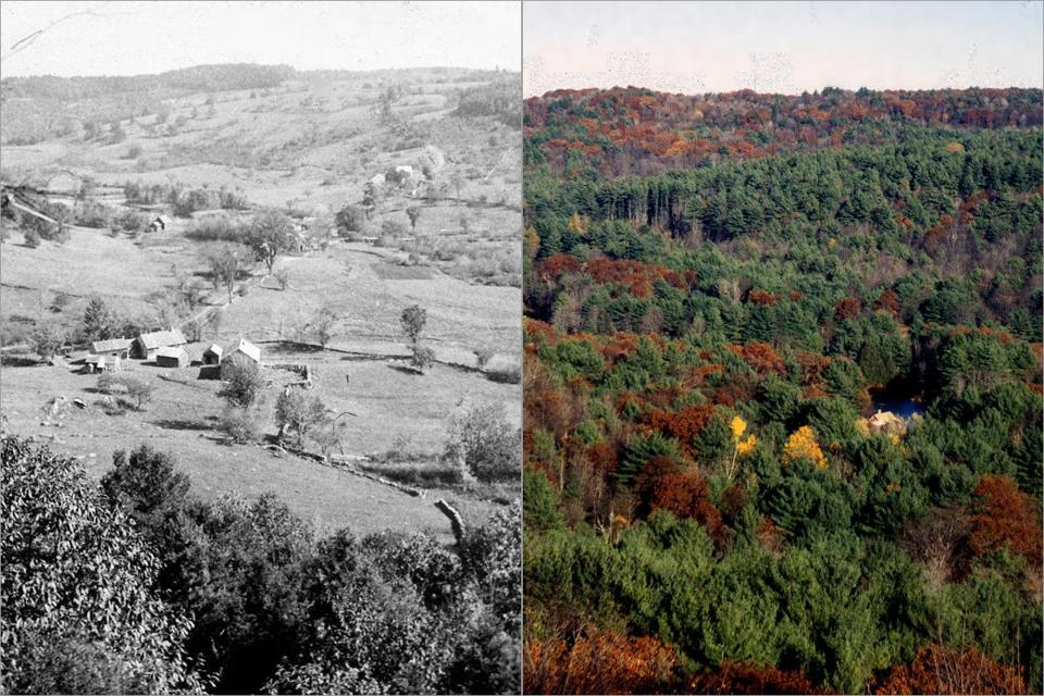 Across New England, areas like the Swift River Valley (above, left, in the 1880s and in 2010) in Petersham have seen their forests, once cut down and cleared for farmland, replenished in the 21st century.