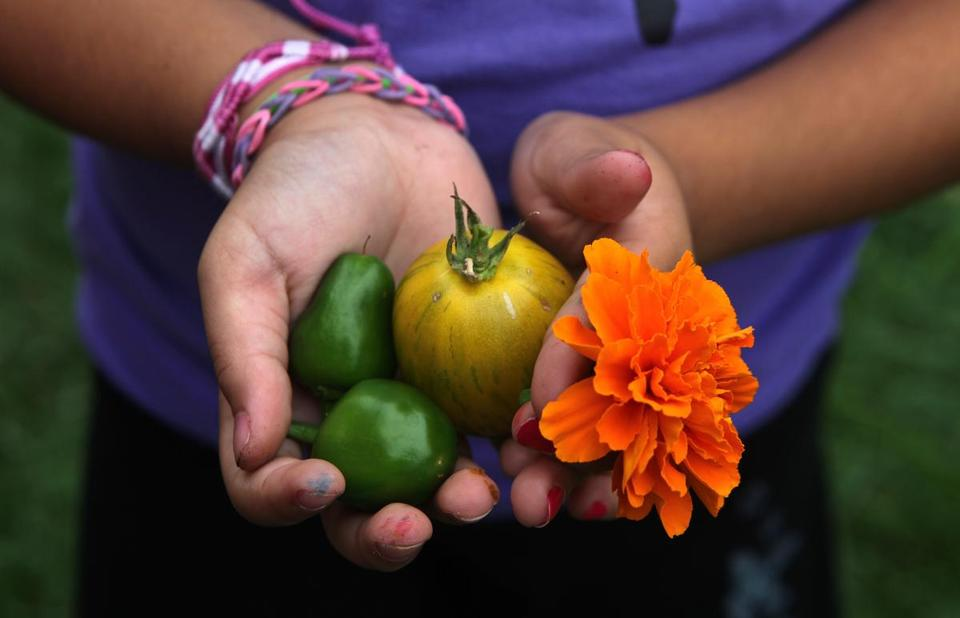 Handpicked by the young students at Bennett-Hemen-way Elementary School in Natick, vegetables such as tomatoes and peppers end up in their school lunches.