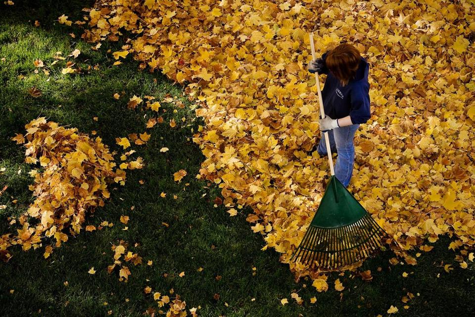 Steps to prepare the lawn and garden for winter include raking leaves.
