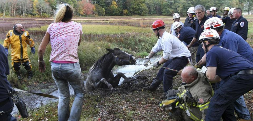 The rescue team worked to remove the horse, Romey, from a drainage ditch.