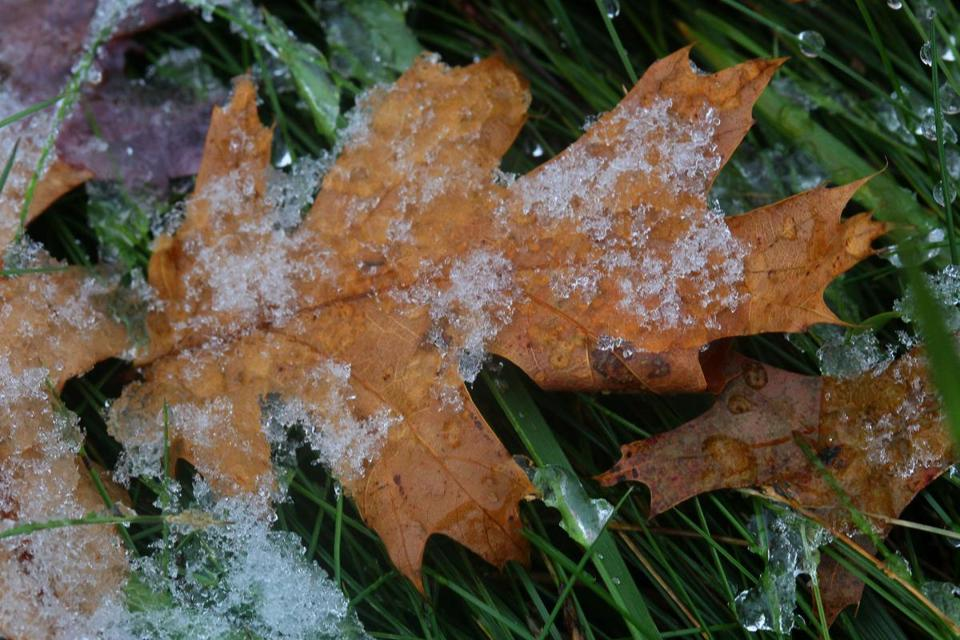 A dusting of snow on fallen leaves in Westwood.