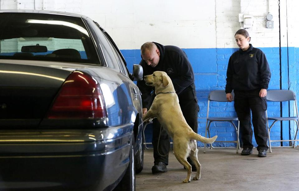 Cambridge police Sergeant E.J. Frammartino worked with his 22-month-old Labrador retriever, Dixie. Observing at right is MBTA Transit Police Officer Stacy Cassetta. If Dixie stays on task, her reward is a tennis ball.