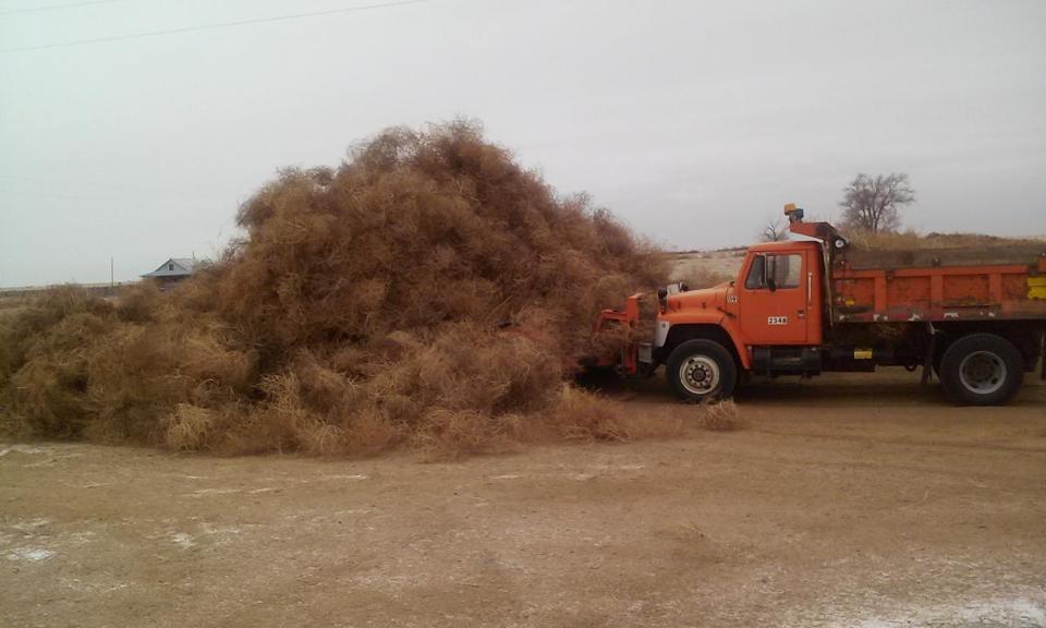 Colorado tumbleweeds overrun drought areas The Boston Globe