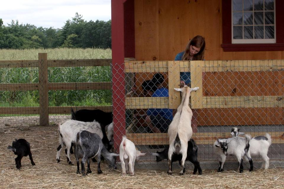 Tyngsborough, MA - 7/23/09 - Despite the weather and recession, farms north of Boston are doing better than ever. Katie Prendergast (cq) visiting from PA, enjoys the animals at Parlee Farm in Tyngsborough. (Globe staff photo/ Bill Greene) section:nowk, reporter:conti,