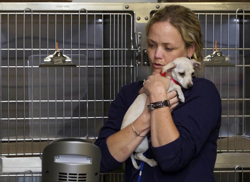 Jennifer Anderson, director of the Spay/Neuter Initiative, comforted a shelter dog after it was neutered Friday.