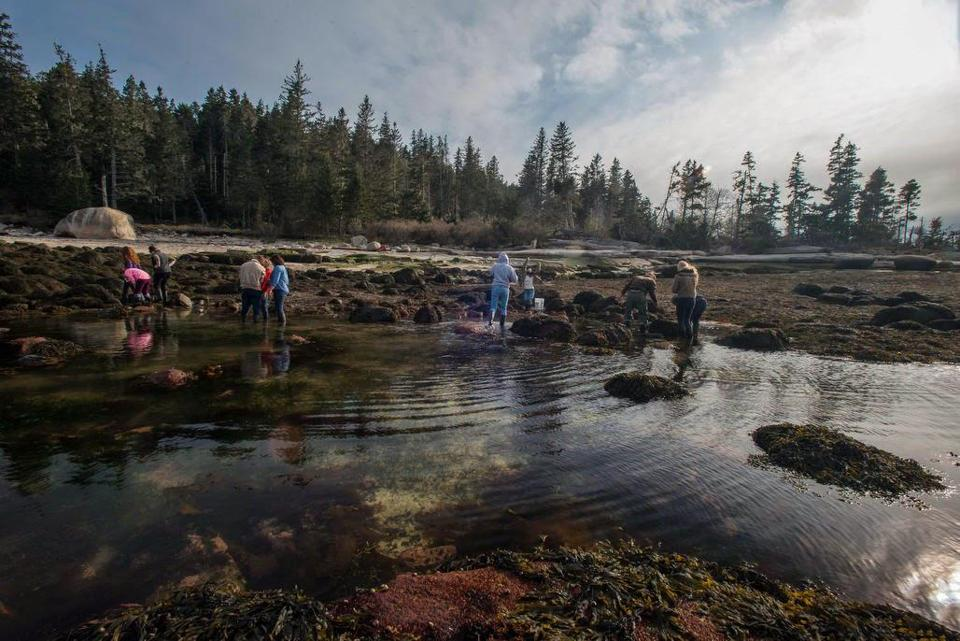 Students from the Cambridge School in Weston traveled with their science teacher to Hurricane Island in Maine to study marine life and ecology.