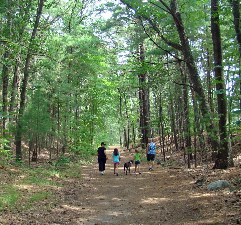 08hiking - Bradbury Mountain State Park offers gentle, woodsy hikes with an easy climb to the 485-foot summit. (Diane Bair for The Boston Globe)
