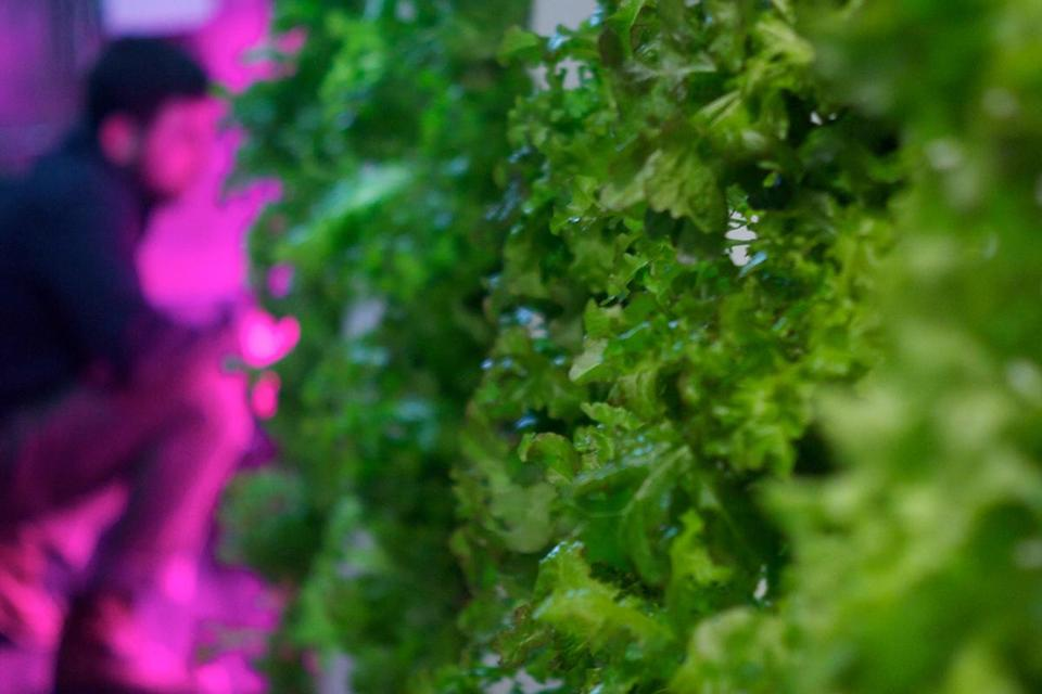 Freight Farms engineered a way to grow food — without soil or sun — that's actually inside a box.