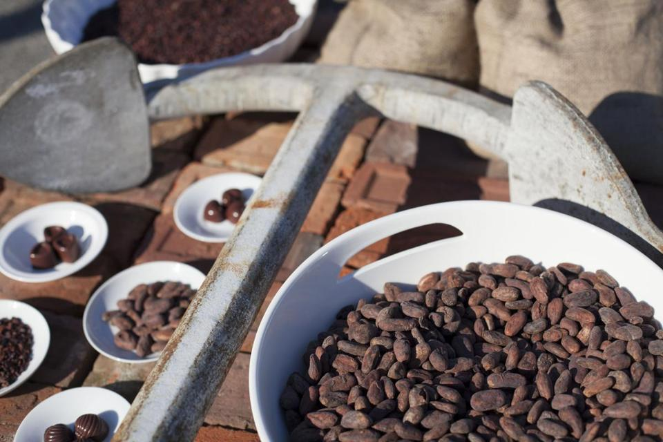 Dominican Republic cacao beans at Chequessett Chocolate in North Truro.