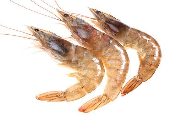 "The Louisiana brown shrimp (above) is one of three species — along with the Eastern oyster and sockeye salmon — that author Paul Greenberg uses a whole chapter of ""American Catch"" to examine ""our nation's broken relationship with its own ocean."""