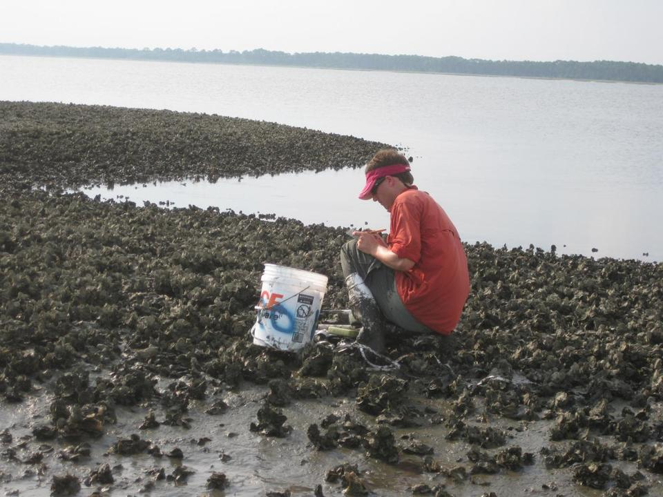 David Kimbro, now a Northeastern professor, was part of a team using a Florida oyster reef to study the hearing abilities of mud crabs.