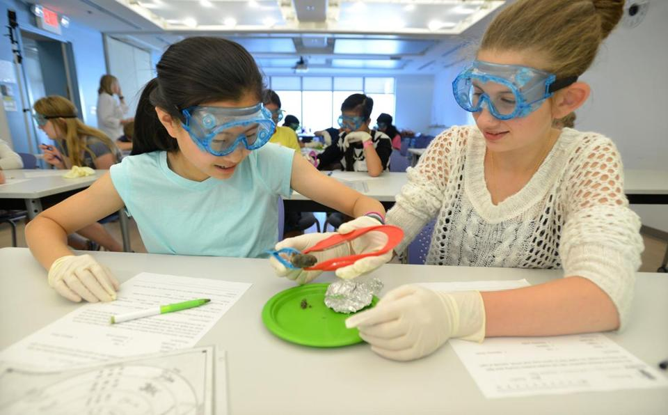 From left: Elizabeth Xu, 11, of Newton, and Julia Kraplin,13, of Holliston, dissect an owl pellet.
