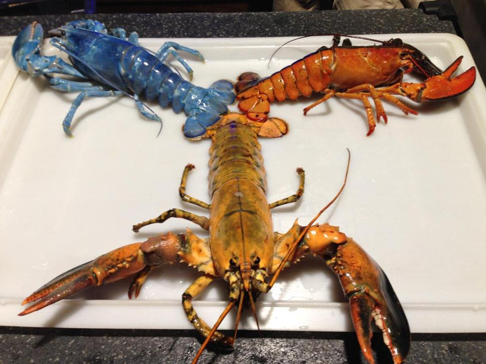 Yellow Lobster
