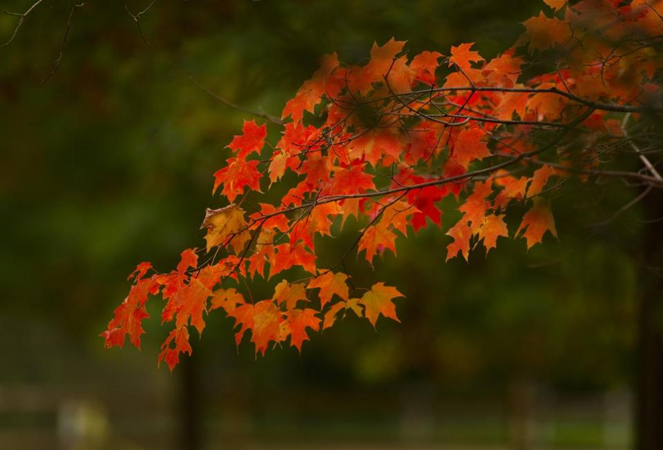Non-New Englanders can now have fall foliage delivered to their doorsteps.