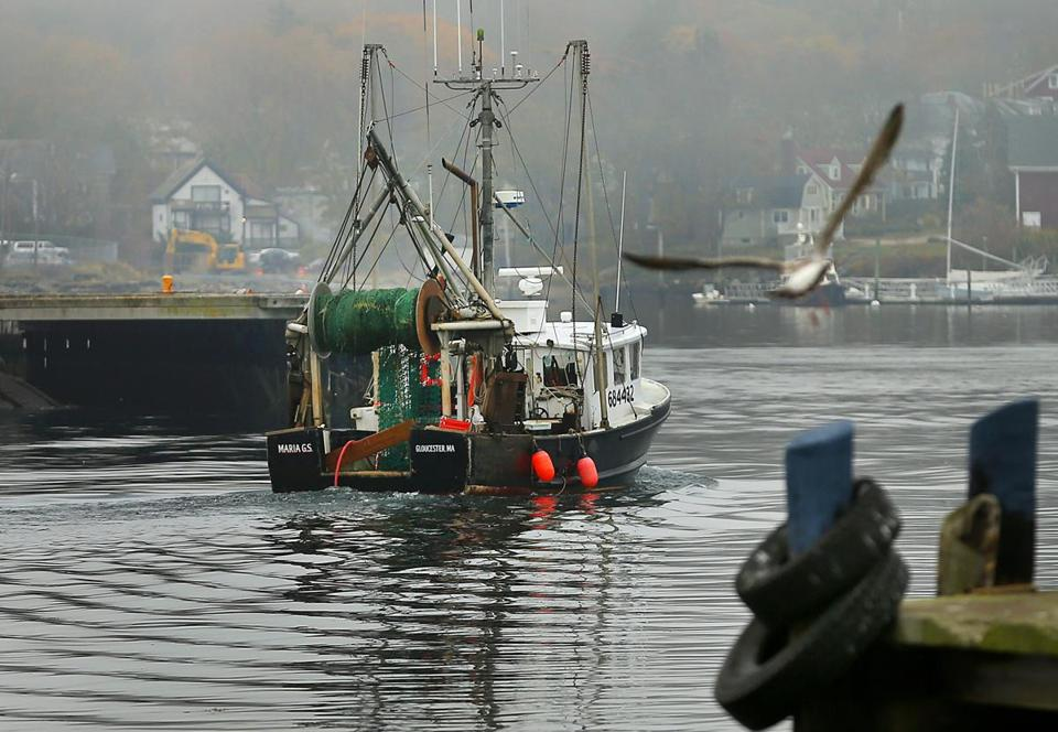 Fishermen argue that cod's demise has been greatly exaggerated, leading federal officials to wrongly ban nearly all fishing of the species.