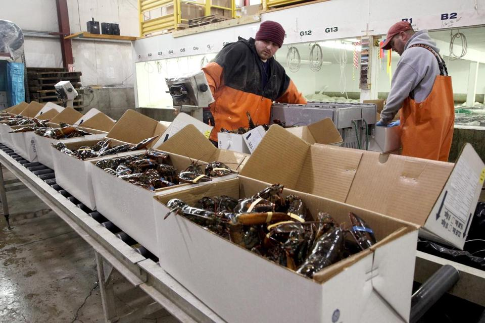 Workers at Maine Coast Lobster pack boxes bound for Shanghai. The York, Maine, company is shipping 6 million pounds of lobster to China each year.