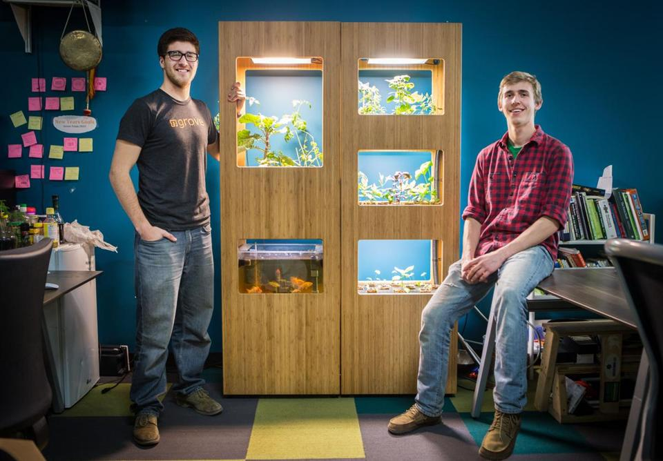 Grove Labs cofounders Gabe Blanchet (left) and Jamie Byron hope for big things from their aquaponics creation. // photograph by Aram Boghosian