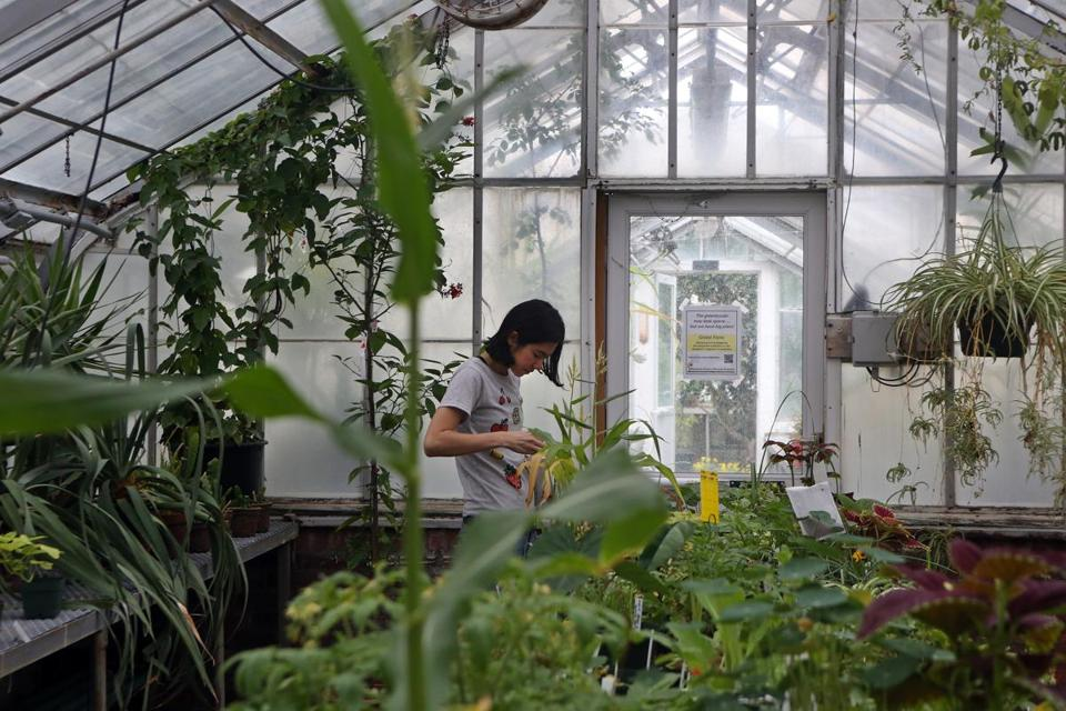 Viewfinder margaret clay ferguson greenhouse the boston globe for Wellesley college botanic gardens