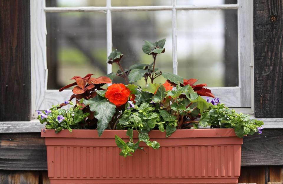how to plant a window box planter boxes when you choose your plants consider using the reliable thrillerfillerspiller great plants for container gardens window boxes the boston globe