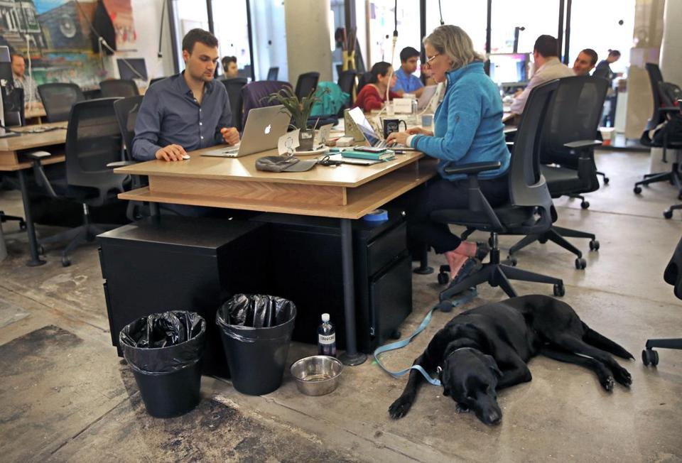 Pamela McNamara worked with her dog Bauer at her feet in Fort Point. McNamara chose the locale for her mobile software business because the building is dog friendly.