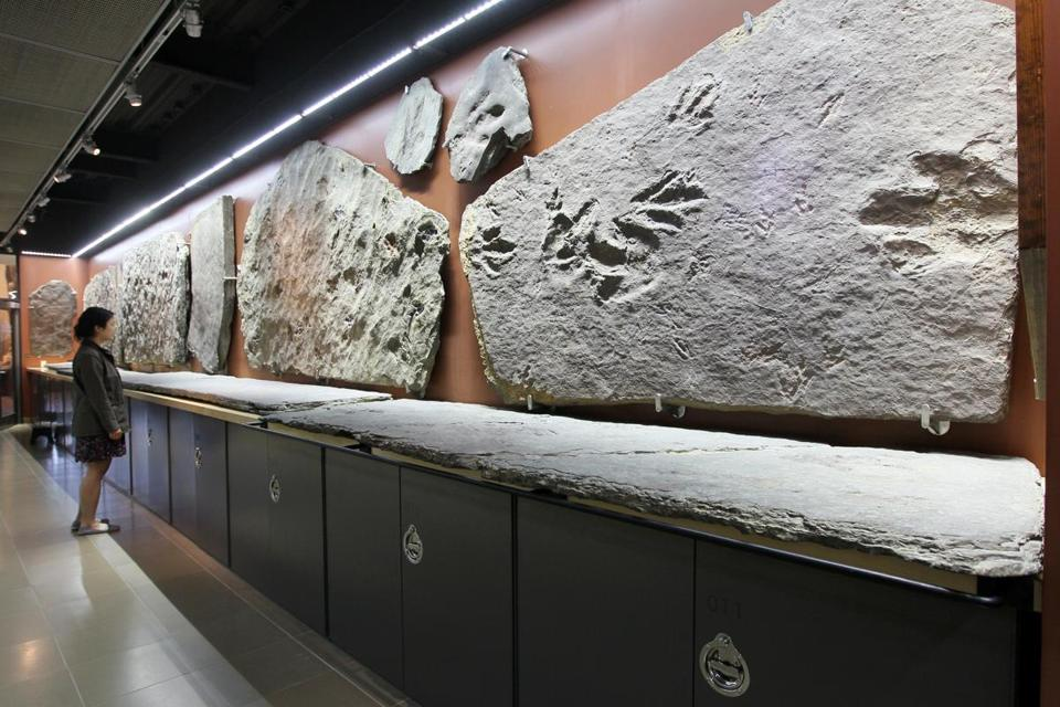 MAY 13, 2015 - AMHERST- MA- Daytripping - Amherst MA . Dinosaur tracks at Amherst College's Beneski Museum of Natual History. (globe staff photo :Joanne Rathe reporter: section: magazine : topic: 060715daytripping)