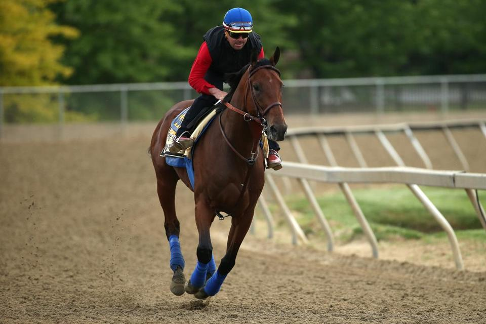 American Pharoah worked out on the Pimlico track Friday in preparation for Saturday's Preakness.