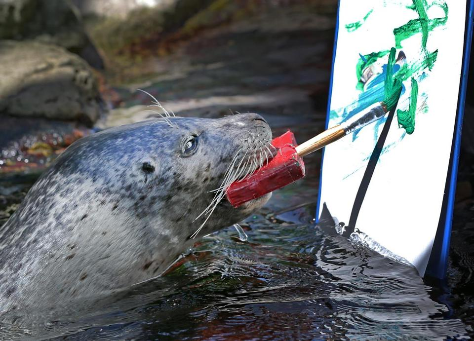 A harbor seal named Cayenne created an artwork at the New England Aquarium in Boston.
