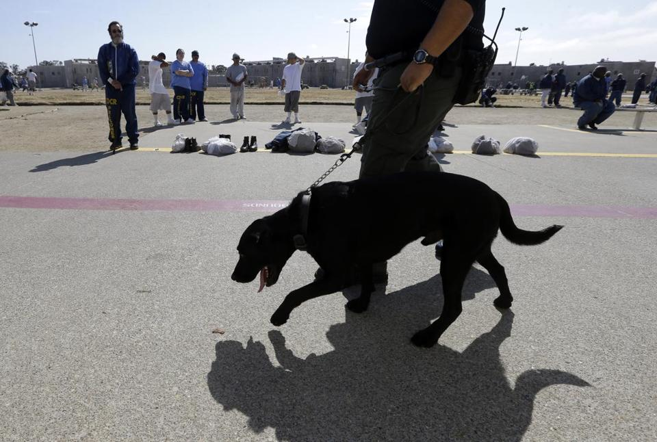 A correctional officer walked a drug-sniffing dog through the main yard at California State Prison, Solano, in Vacaville, Calif., on May 20.
