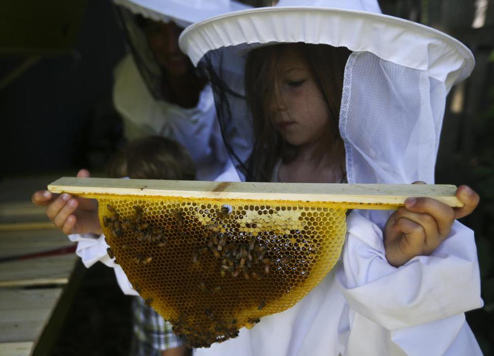 Pearl Neafsey, 6, holds one of the honeycombs from the beehive behind her family's shed in Newton. Right: Some of the honey that Boston-based Best Bees gathers for third-year beekeepers Niles and Thiago DaSilva of the Boston.