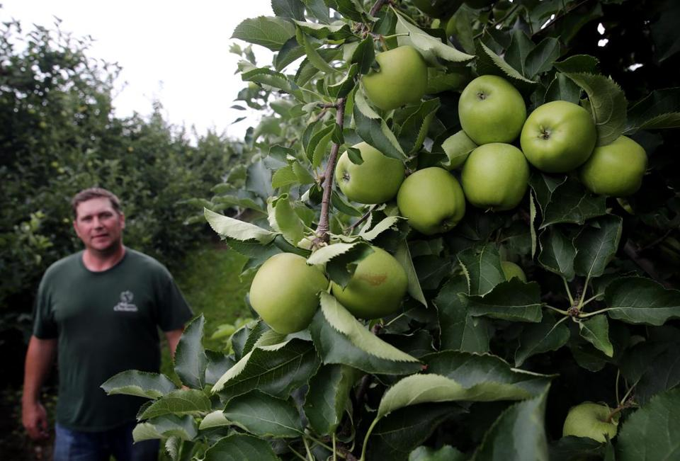 "A ""big bloom"" was the cause of this year's bonanza, said Josh Fitzgerald (pictured), co-owner of Mann Orchards."