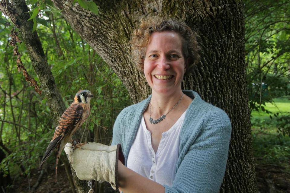 Lincoln, MA - 08/20/15 - Renata Pomponi, the new Sanctuary Director (cq) of Mass Audubon's Drumlin Farm Wildlife Sanctuary, with an American kestrel. Lane Turner/Globe Staff Section: MAG Reporter: yes Slug: 091315firstperson