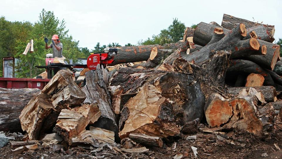 The price of firewood at the Little Brook Logging and Garden Center in Saugus has risen $50 a cord, to $375 for seasoned wood and $275 for so-called green wood.