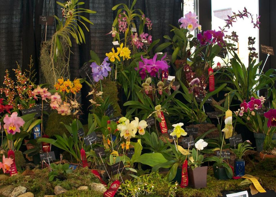 Orchid Society Displays Its Special Blooms In Winchester The Boston Globe