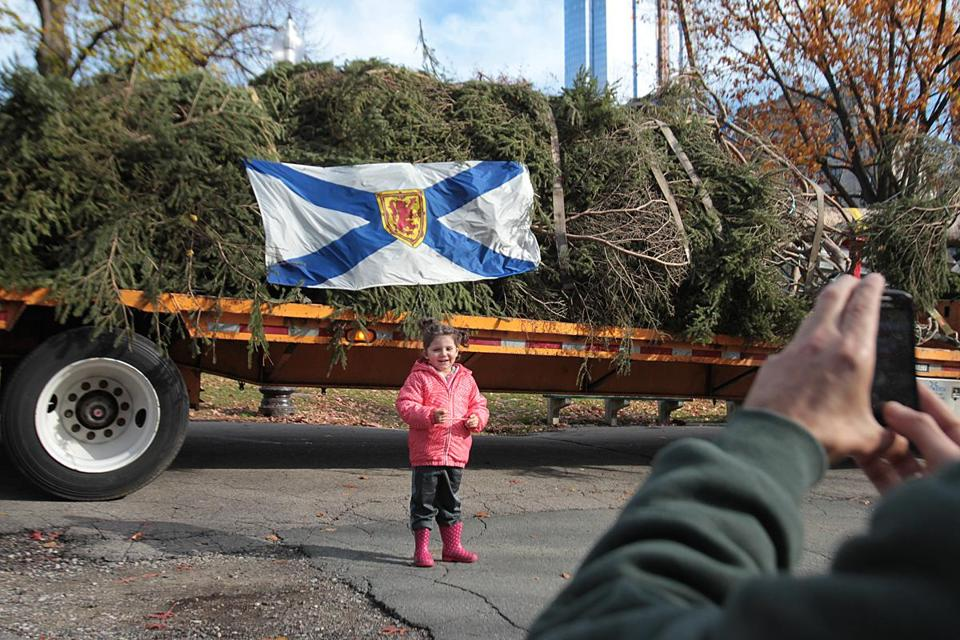 Sofia Bazarra, 3, of Spain had her photo taken by her father in front of the giant tree in Boston Common.
