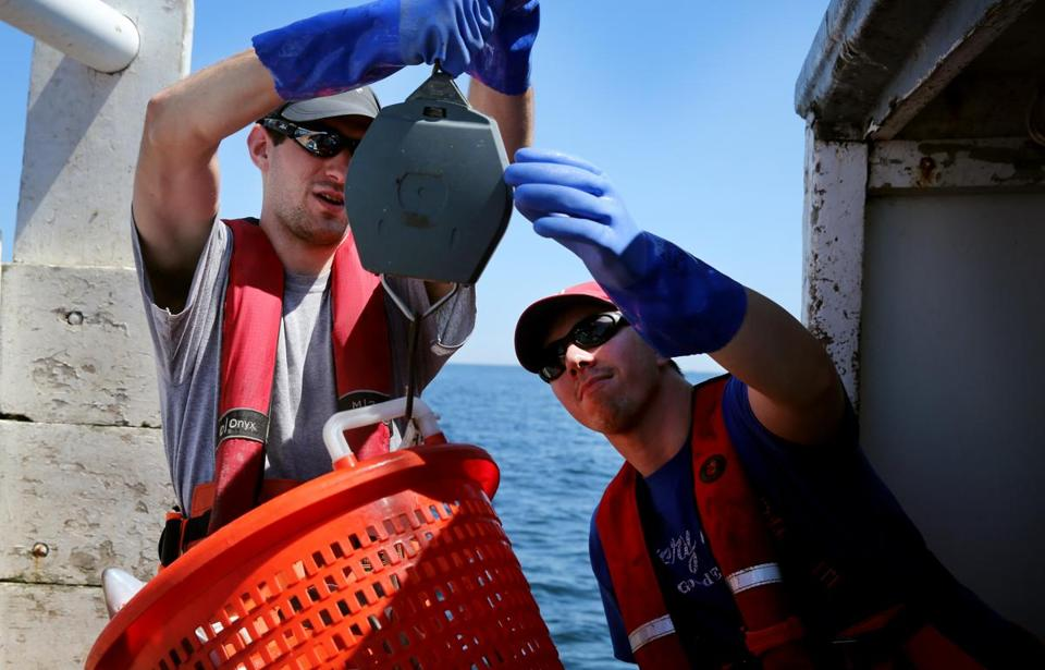 Observer trainee Tom Butler , 22, and trainer Wes Rand weigh a basket of spiny dogfish during a gillnet training trip in the Massachusetts Bay near Scituate last July.