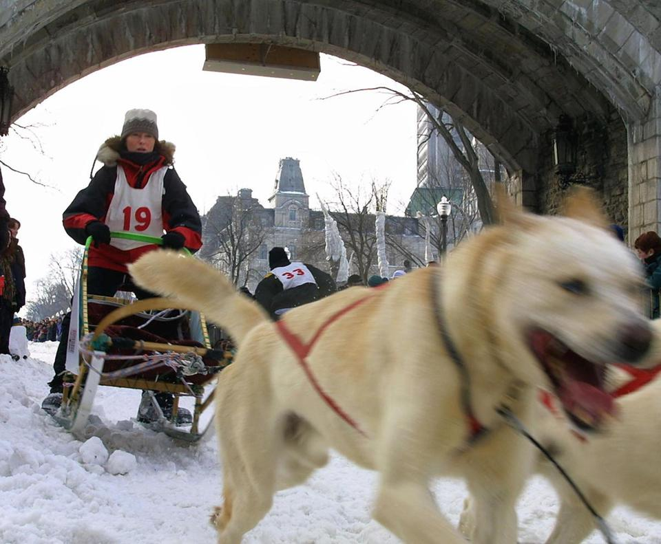 A Quebec musher drove his dog sled through the streets of Old Quebec City during Winter Carnival.
